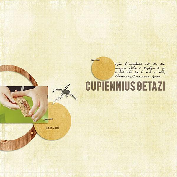 20140514-Cupiennius_Getazi
